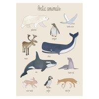 Plakat, Arctic animals