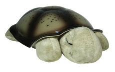 Twilight Turtle, Mocha